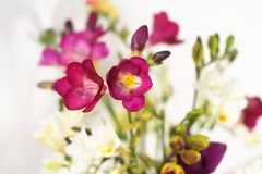 Purple freesia flowers stock image