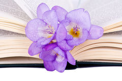 Purple Freesia on an open book Royalty Free Stock Images