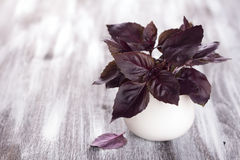 Purple fresh basil. On the wooden table, selective focus Royalty Free Stock Photo