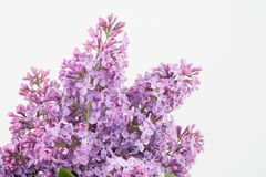 Purple freshness Royalty Free Stock Images