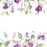 Purple fuchsia bouquet. Floral botanical flower. Watercolor background illustration set. Frame border ornament square. Purple fuchsia bouquet. Floral botanical vector illustration