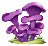 Purple fungi Stock Photo
