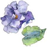 Purple gardania flower. Floral botanical flower. Isolated illustration element. Aquarelle wildflower for background, texture, wrapper pattern, frame or border Stock Photo