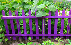 Purple Garden Fence Stock Images
