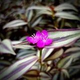Purple garden flower. Purple garden  park leaf royalty free stock photos