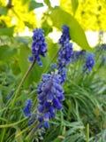 Purple garden flowers royalty free stock photos