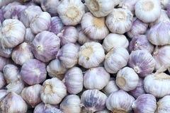 Purple garlic royalty free stock photo