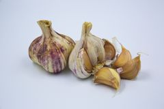 Purple Garlic Cloves. Purple Garlic or `ail violet` with cloves torn out of one for presentation Royalty Free Stock Image