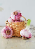 Purple Garlic. Fresh garlic in a basket. Garlic bulbs in a basket and on the side stock photography