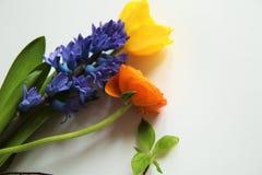 Purple Gerbera Stock Photos