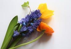 Purple Gerbera Royalty Free Stock Photography