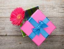 Purple gerbera flower in gift box Stock Image