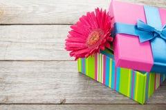 Purple gerbera flower in gift box Royalty Free Stock Image