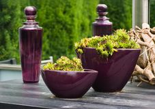 Purple glass bottles and vases with plants. On table in the garden in summer Stock Photography