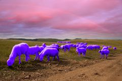 Free Purple Goats On Meadows Royalty Free Stock Photo - 113194325
