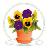 Purple & Gold Pansies in Flowerpot. Golden and purple pansies in a clay flowerpot with saucer Stock Photography
