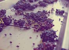 Purple grape on belt line Royalty Free Stock Photography