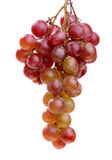 Purple grape bunches Stock Image