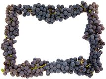 Purple grape frame Royalty Free Stock Images