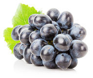Purple grape isolated on the white background Royalty Free Stock Photography