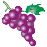 Purple grapes stock illustration