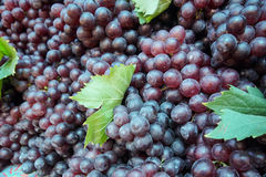 Purple grapes Royalty Free Stock Images