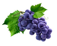 Purple grapes bunch on white background. Purple Isabella grapes bunch on white background as package design element royalty free stock image