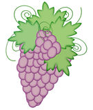 Purple Grapes Illustration Stock Image