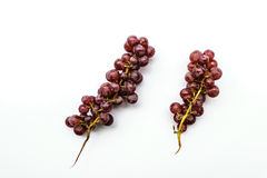 Red grapes isolated white background royalty free stock photos