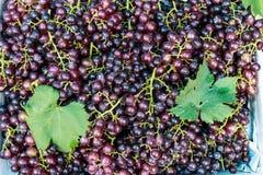 Purple grapes Stock Image