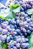 Purple grapes Royalty Free Stock Photo