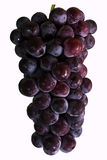 Purple grapes Royalty Free Stock Photos