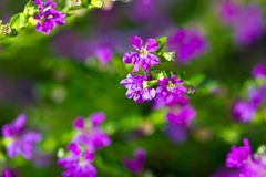 Purple and green background Stock Images