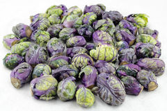 Purple Green Brussels Sprouts. Pile of purple green brussels sprouts cruciferous vegetables on a white paper towel Royalty Free Stock Image