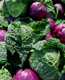 Purple and Green Cabbages royalty free stock image