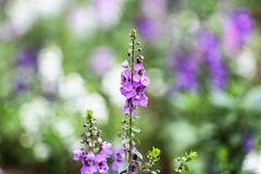 Purple and Green Flower Plant Royalty Free Stock Images