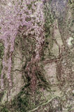 Purple and green marble granite stone slab surface Royalty Free Stock Photography