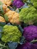 Purple Green Orange Cauliflower Royalty Free Stock Image