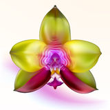 Purple-green Orchid Flower royalty free illustration