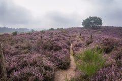 The purple haze Stock Image
