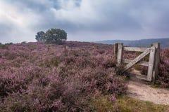 The purple haze Royalty Free Stock Image