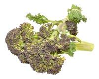 Purple Headed Broccoli Royalty Free Stock Photography