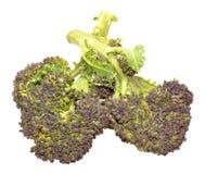 Purple Headed Broccoli. Fresh raw purple headed broccoli isolated on a white background Royalty Free Stock Photos