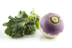 Purple headed turnips stock photography