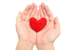 Purple heart in the hands Royalty Free Stock Photo