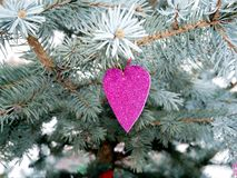Purple heart on the branches spruce, romantic Royalty Free Stock Photo