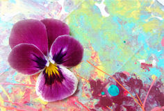 Purple heartsease on a picturesque  background with spray paint. Royalty Free Stock Image