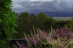 Purple heather on pot. Heather flowers on window. Concept of the countryside view from window, blurry background. Rainy cloudy day royalty free stock image