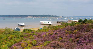 Purple heather with view to Brownsea Island Poole Harbour Dorset England UK Stock Images