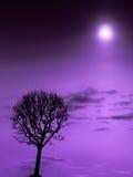 Purple heaven Stock Photos